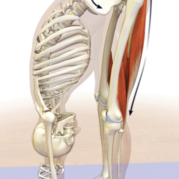 4 Hamstring Stretches For Office Professionals